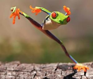 Kung-Fu-Frog-Batam-Island-Indonesia
